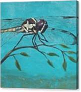 Praying Dragonfly Canvas Print