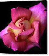 Prelude To A Rose Canvas Print