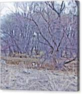 Prescott Arizona Watson Lake Bayou Trees Scrub Water Grasses 3142019 4916 Canvas Print