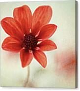 Pretty Orange Flower Canvas Print