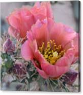 Prickly Pear Cactus With Pink Flowers Canvas Print