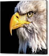 Profile Of Bald Eagle Canvas Print