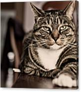 Proud Cat Canvas Print