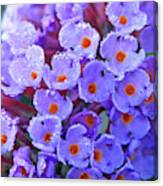 Purple Flowers In The Morning Dew Canvas Print