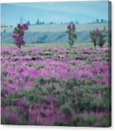 Purple Grain Canvas Print