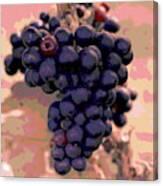 Purple Grape Bunches 18 Canvas Print