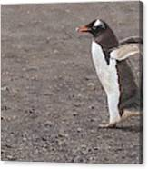 Quick Hurry - Gentoo Penguin By Alan M Hunt Canvas Print
