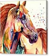 Rainy Horse Canvas Print