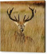 Red Deer Portrait 2 Canvas Print