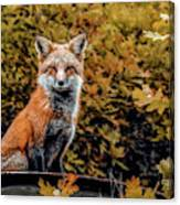 Red Fox In Fall Colors Canvas Print