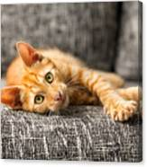 Red Kitten Lying On Bed And Looking At Canvas Print