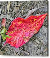 Red Leaf On Green's Hill Canvas Print