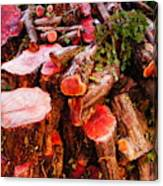 Red Logs Canvas Print