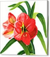Red Orange Amaryllis Square Design Canvas Print