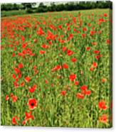 Red Poppies Meadow Canvas Print