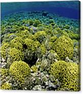 Reef Garden Canvas Print