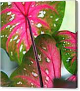 Reflections On The Calming Of Pink Canvas Print