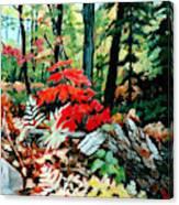 Resilient Maple Canvas Print