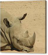 Resting Rhinoceros With His Head Down In A Sandy Area Canvas Print