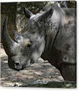 Rhino Standing In The Shade On A Summer Day Canvas Print