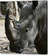 Rhinoceros With Two Horns Up Close And Personal Canvas Print