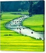 Rice Field And River, Ninhbinh, Vietnam Canvas Print