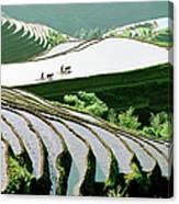Rice Terraces Canvas Print