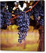 Ripe Grapes Canvas Print