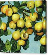 Ripening Pears, 1885 Canvas Print