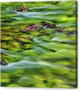 River Moss Canvas Print