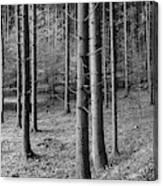 Road Passing Through Forest, Stuttgart Canvas Print