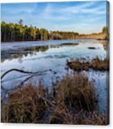 Roberts Branch Pine Lands Canvas Print