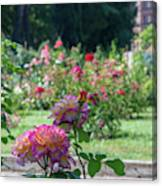 Rome Rose Garden Canvas Print
