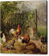Rooster With Hens And Chicks Canvas Print
