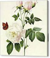 Rosa Bengale The Hymenes By Redoute Canvas Print