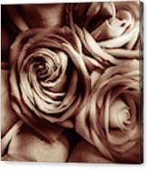 Rose Carmine Canvas Print