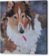 rough Collie Canvas Print