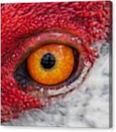 Sandhill Crane Eye Canvas Print