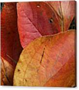 Sassafras Autumn Canvas Print