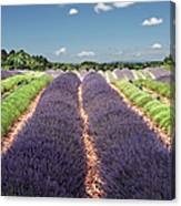 Scent Of Lavender Of Provence Canvas Print