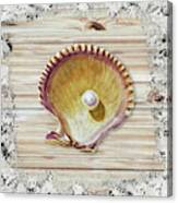 Sea Shell Beach House Rustic Chic Decor IIi Canvas Print