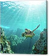 Sea Turtle Coral Reef Canvas Print