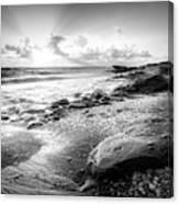 Seashells On The Seashore In Black And White Canvas Print
