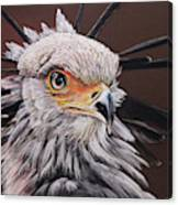 Secretary Bird Canvas Print