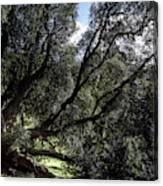 Secular Tree Canvas Print