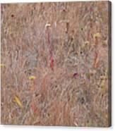 September's Hidden Treasure Canvas Print