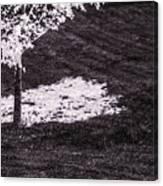 Shade Of Tree 4th Canvas Print