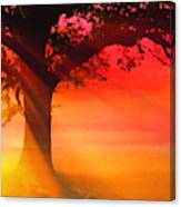 Shade Tree At Dawn Canvas Print