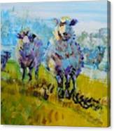 Sheep And Lambs In Bright Sunshine Canvas Print