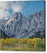Shining Poplars Canvas Print